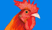 Draw_Something_121110_rooster-tmb