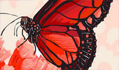 Draw_Something_130428_butterfly-tmb